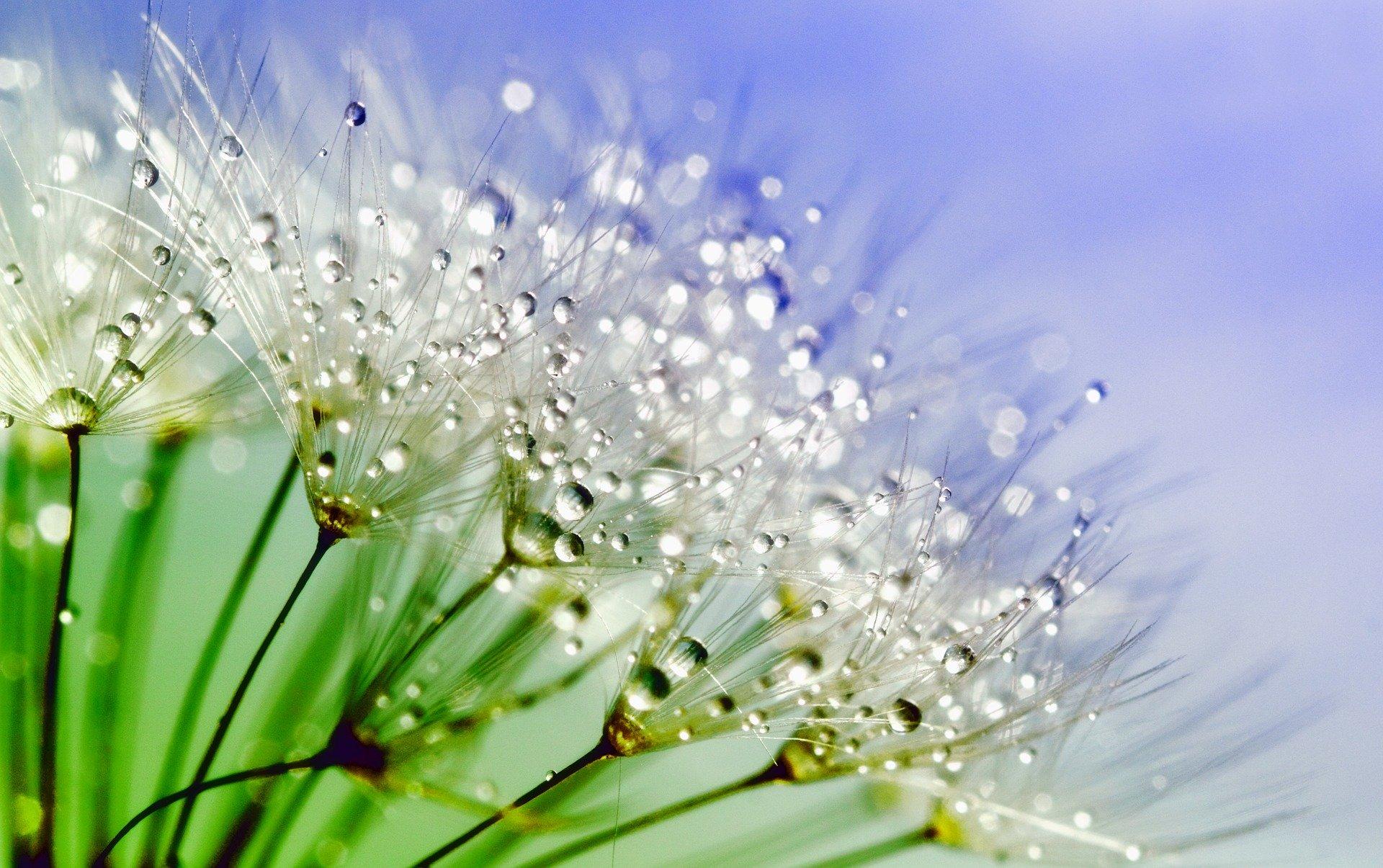 Purifier son espace avec des élixirs floraux